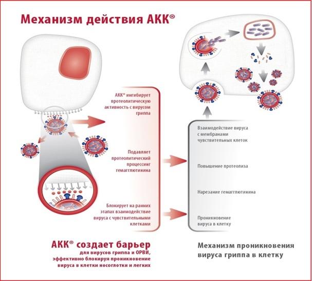 akk_1